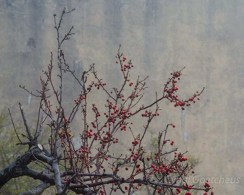tree wabi sabi