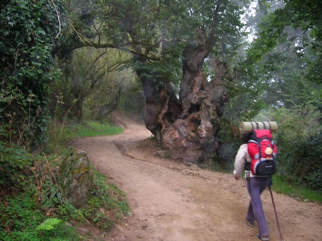 2. Bosque milenario en Barbadelo. Lugo. Autor, FreeSat