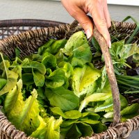 0529 - Salad
