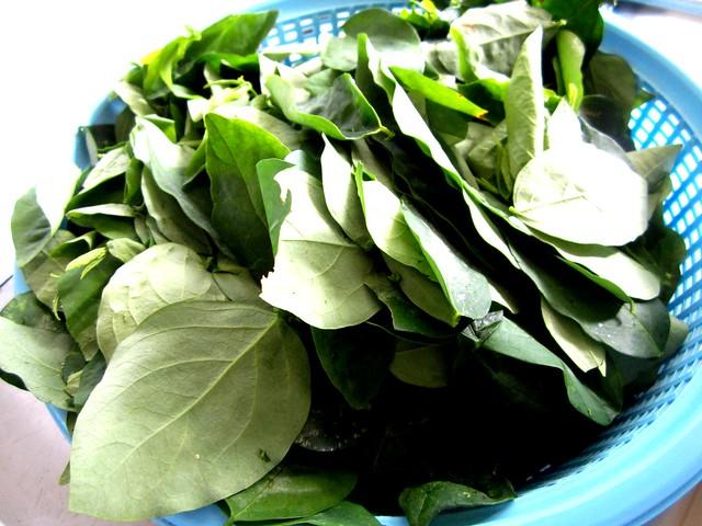 Cangkuk manis leaves