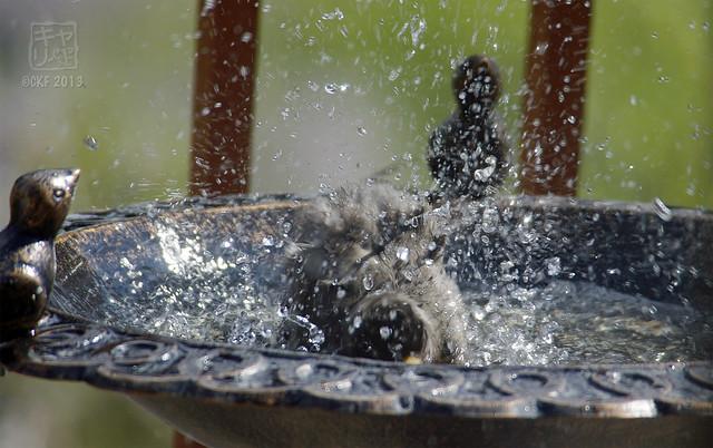 Robins Bath 11