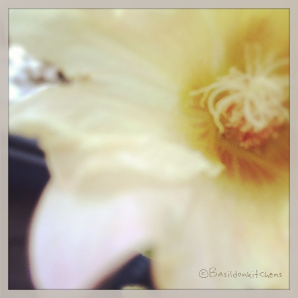 Aug 12 - what is it? #photoaday #macro #mygarden