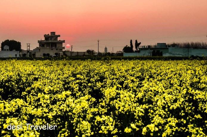 Sunset Sasron Ke Khet
