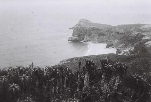 Cape of Good Hope 3