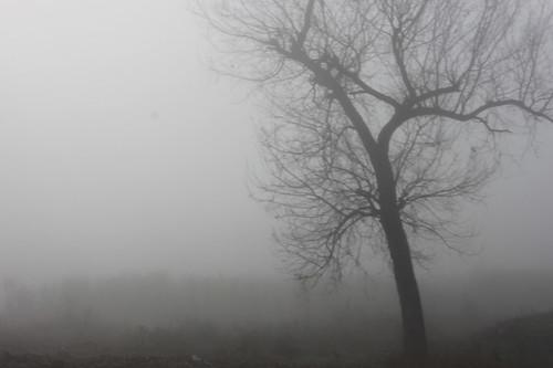 IMG_9954-fog