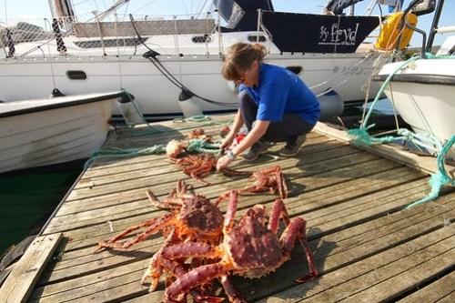 """Vi fikk masse krabber og Wenche er i full gang med """"slakting"""""""