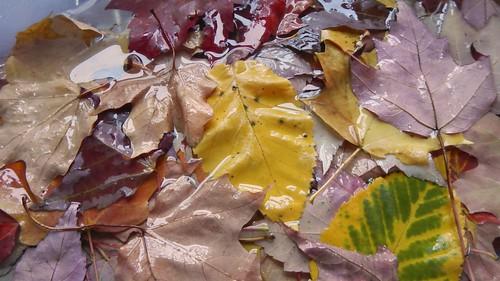Glycerin Leaves 4