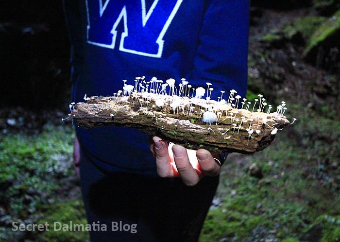 Nice looking mushrooms