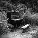 piano in the woods 9.6.13_0007