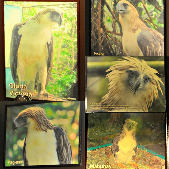 Philippine Eagle Photo Exhibit