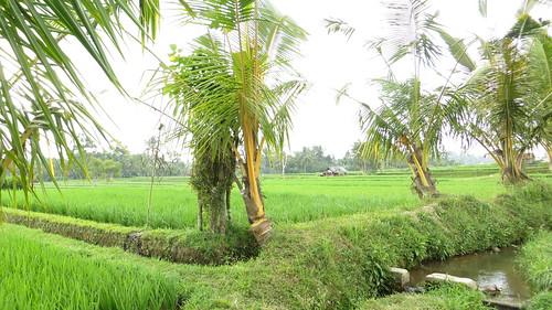 palms and waterways