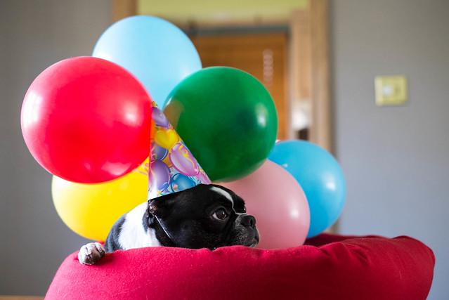A dog's birthday