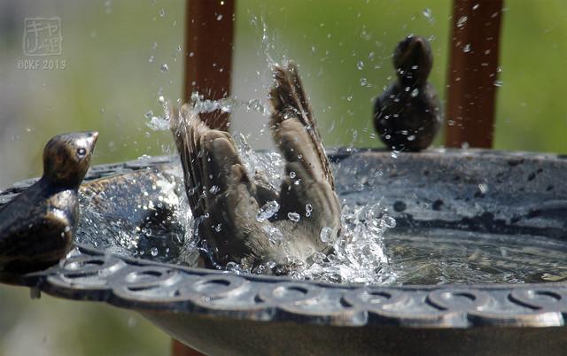 Robins Bath 02