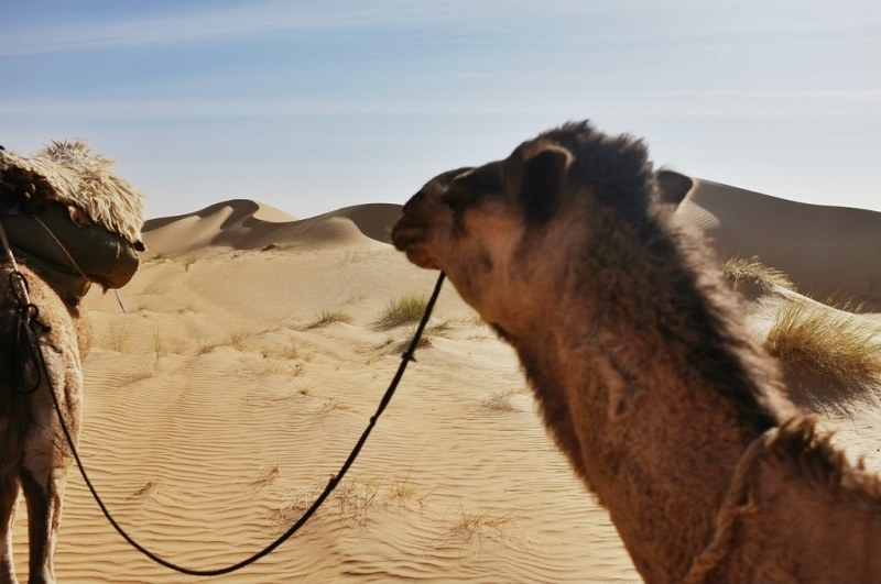 Curves and camels