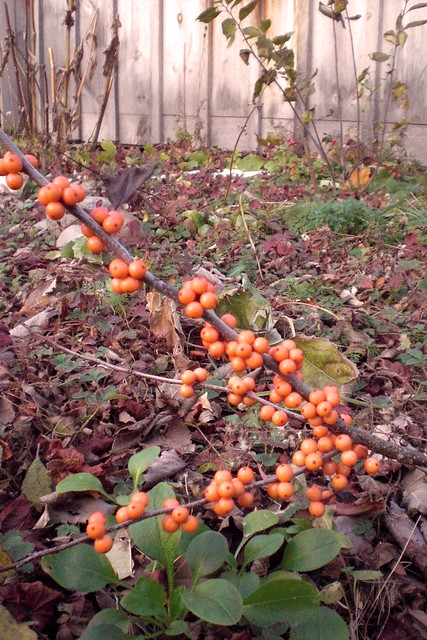 orangewberry