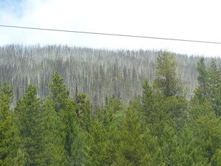 Forests Showing Signs of Past Fires