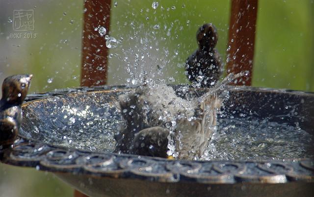 Robins Bath 13