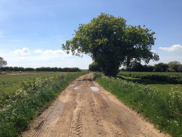 Wensum Way, near Gressenhall