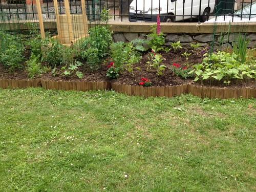 Garden 6/24/13