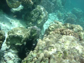 Snorkeling in Taha'a coral garden