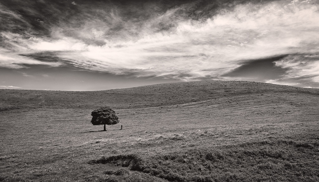 Lone Tree #2 - Parker Ranch - 2013