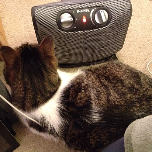 Ziggy gets so close to the space heater that I think he's going to singe his fur.