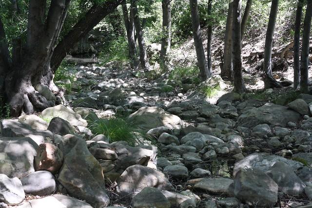 Lion Creek