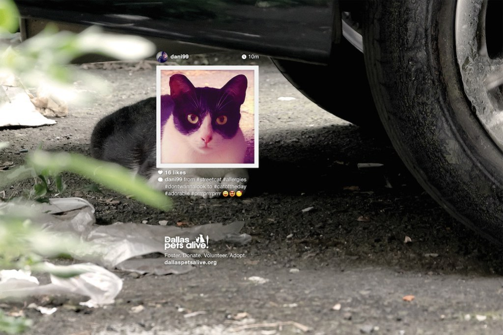 Dallas Pet Alive - Cat Profile