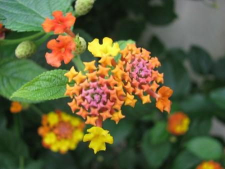 magic flower !