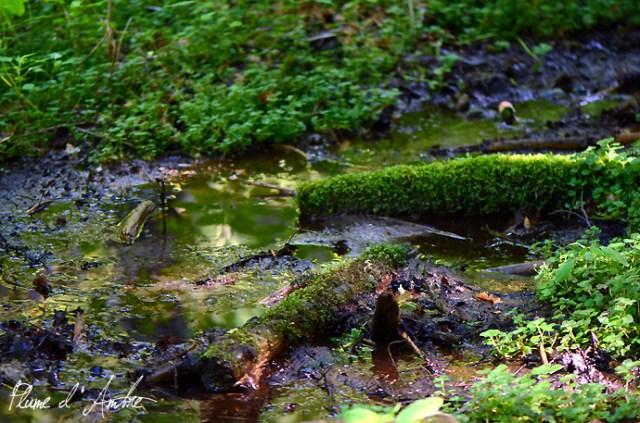 ruisseau sur le chemin