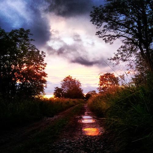 Dawn bat survey in Cumbria #PAASvy