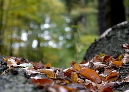 Autumn 3 by Alexandra Wirth