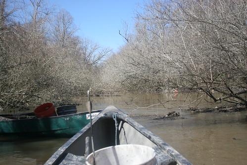 Brushy bayou