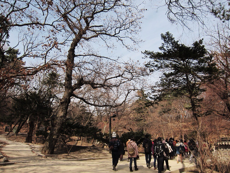 Changdeokgung Palace #Korea #koreatrip #changdeokgung #seoul