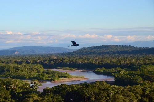 A single macaw