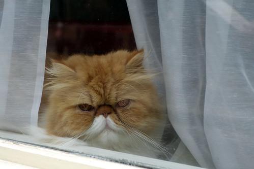 Boredom ~ Neighbors' Cat ~ Paris ~MjYj by MjYj
