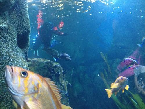 Primates invade the Oregon Coast Aquarium