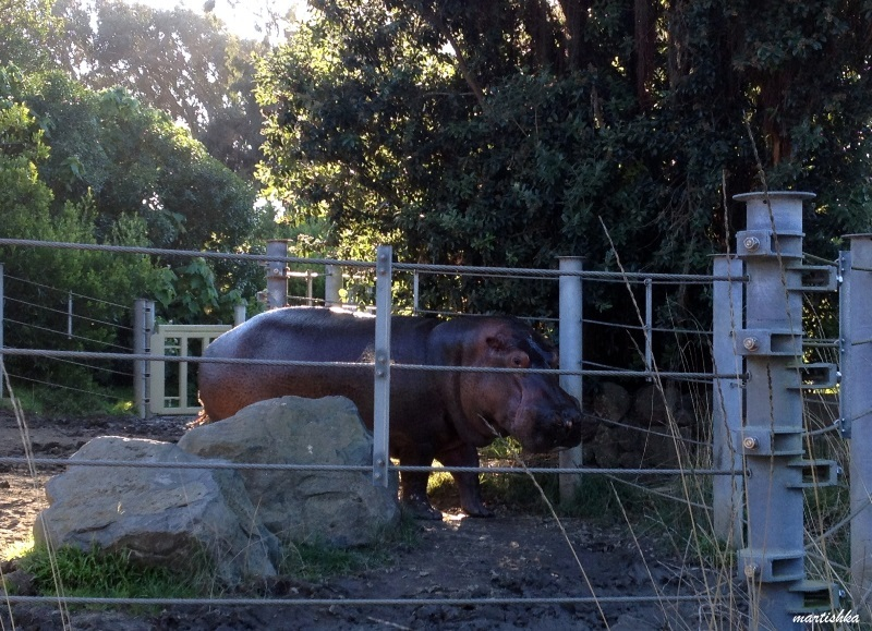 San Francisco Zoo (35)