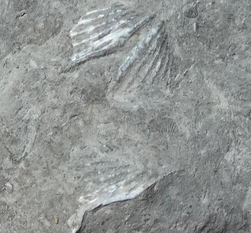 fossilrama1