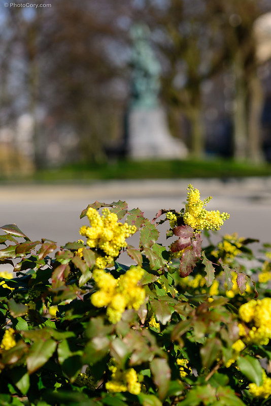 yellow flowers bush brussels