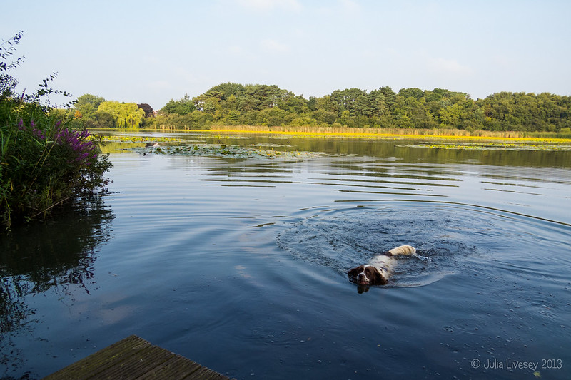 Max has a swim in Hatch Pond