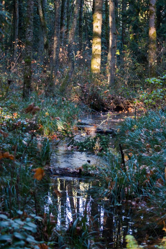 reflecting bog
