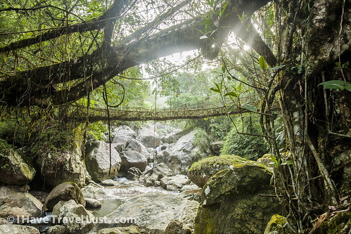Cherrapunjee living tree bridges