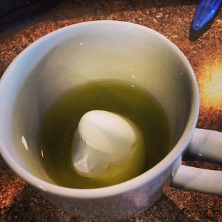 Ahhhh! There's a shark in my tea  #shark #greentea #mustgetcaffeine
