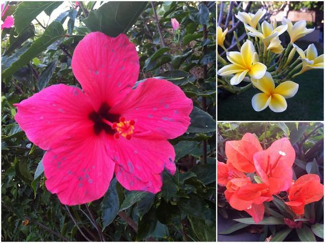 Bali fleurs
