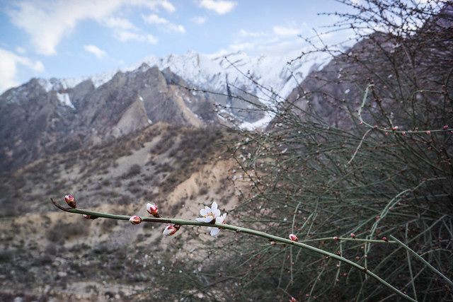 Spring blossom on its way in the Zagros