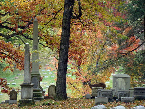 Cemetery Deer - Oct. 31st 2013