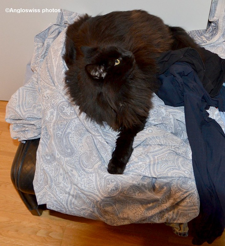 Nera on the clean washing