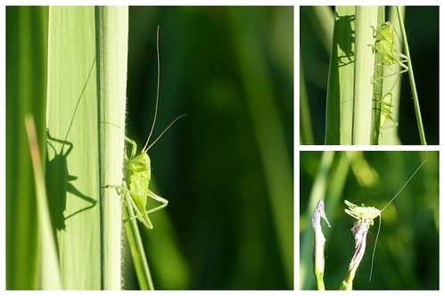 Grashopper 2013-06-17