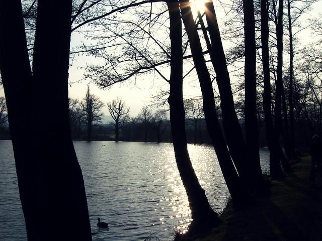 Der Teich vor dem See